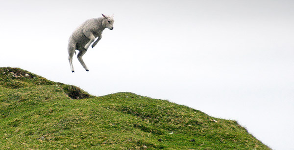 Lamb jumping, Isle of Iona, Scotland, UK