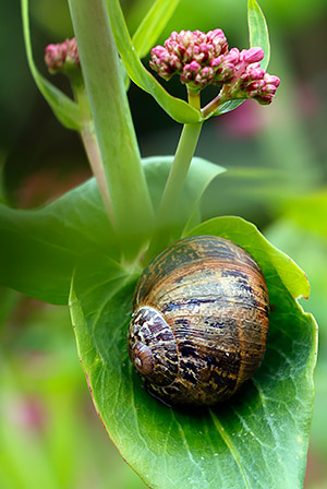 Gastropod image, photo