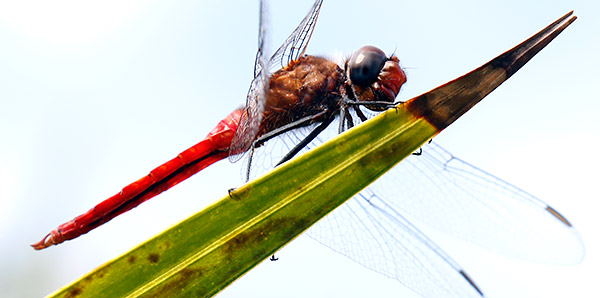 Insect image, photo