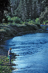 Fly fishing on the Gold Fork River, Donnelly, Idaho