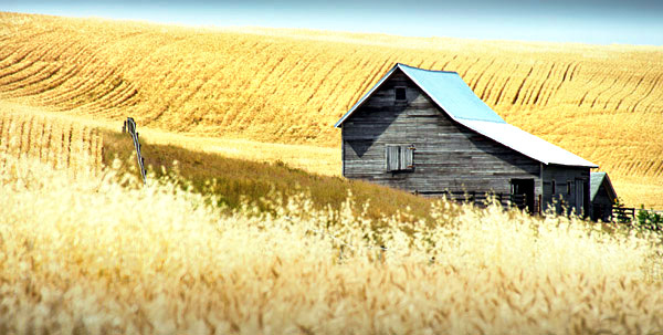 Palouse agricultural image, grain harvest, Idaho and Washington