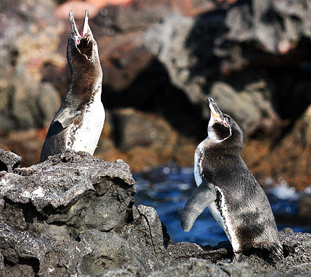 Photo tours to the Galapagos Islands and Cloud Forest, Ecuador