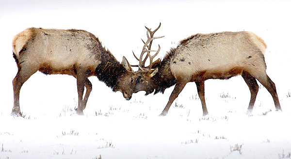 Winter photo tours of Yellowstone and Grand Teton national parks in Wyoming